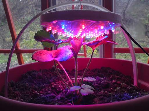 Чем занимаются садоводы в январе, в ожидании тепла и солнца
